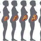 Как развивается беременность по неделям