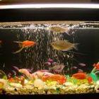Как организовать жизнь рыбкам