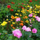 Как освещение влияет на урожайность садово-огородных культур
