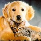 Как сделать выбор между кошкой или собакой