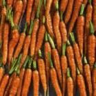 Как бороться с морковной  мухой
