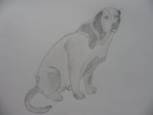 как нарисовать собаку карандашом поэтапно