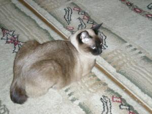 Как приучить котёнка к лотку2