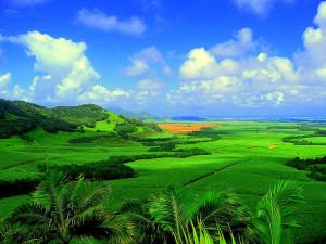 Как отдохнуть в Маврикии - отдых в Маврикии всей семьёй