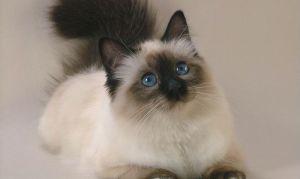 Как правильно осматривать кошку дома