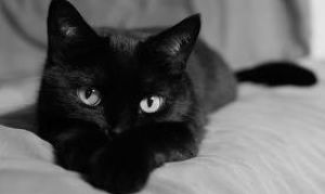 Как выбрать котенка: кошка или кот