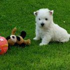 Как влияет собака на здоровье человека