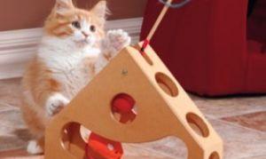 Как общаться и играть с котами