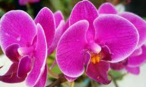 Как проще выращивать комнатные растения