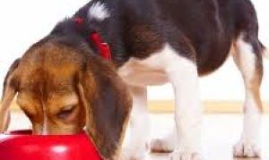 Как должна питаться собака правильно