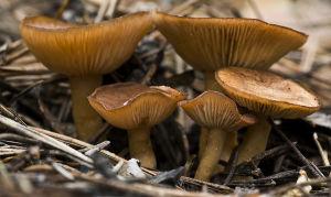 Как мариновать грибы: белые грибы, грузди, маслята и опята