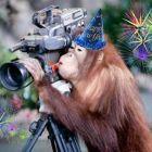 Новый год 2016 – год Огненной обезьяны