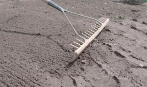 Как посадить картошку правильно