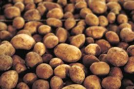 Как спасти картофель от колорадского жука