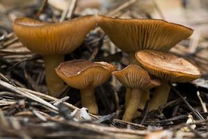 Как мариновать грибы: белые грибы, грузди, <a href=