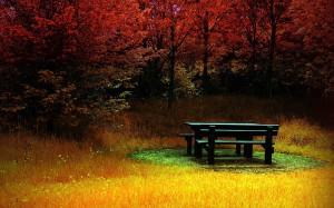 Как отдохнуть в лесу – отдых в лесу всей семьёй.