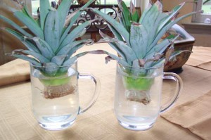 Обработка хохолков ананаса