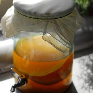 Как вырастить чайный гриб дома самостоятельно