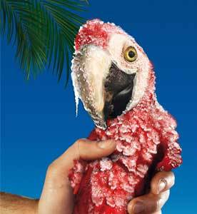 Обледеневший попугай