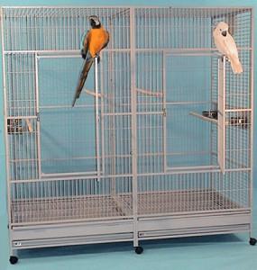 Новое пристанище для попугаев в тёплом месте