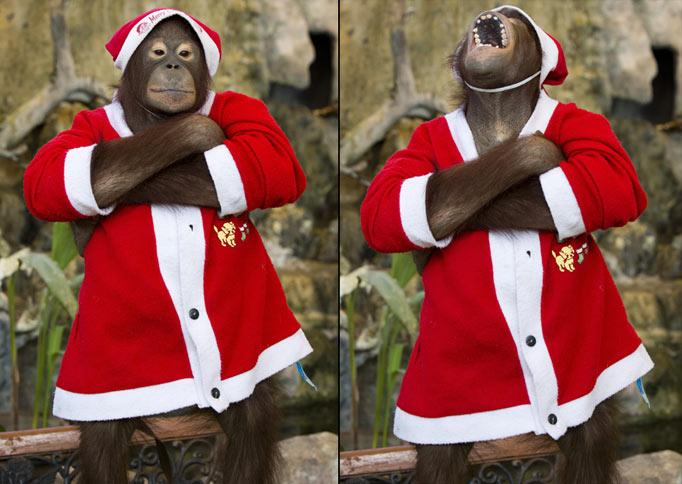 Новогодняя обезьянка
